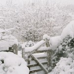 Back gate in snow