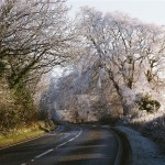 Beech in hoar frost - Dec 2010