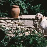 Gigha in the White Garden