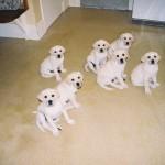Puppies April 2007 (Gigha far right)