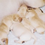 Gigha's Puppies, March 2011: Sleeping Group
